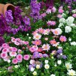 Canteiro-de-flores